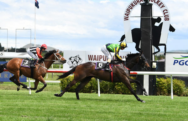 Basarwa winning on debut at Hastings. Photo: Race Images Palmerston North