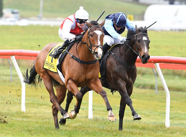 Bounty recorded Glen Harvey's first win as a trainer at Taupo on Wednesday. Photo: Race Images