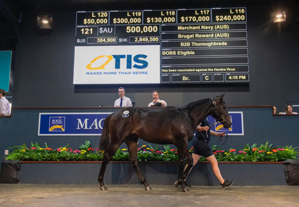 $500,000 Merchant Navy colt from Brugal Reward.