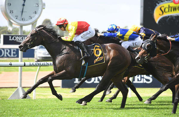 California Zimbol wins the Listed Darby Munro Stakes - image Steve Hart