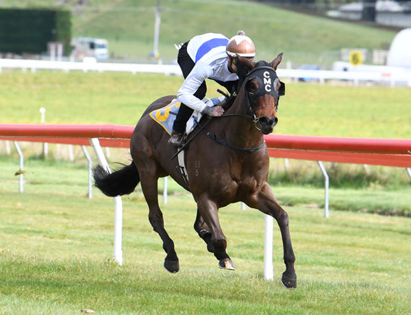 Catalyst winning his 1100m trial at Taupo on Wednesday. Photo: Race Images