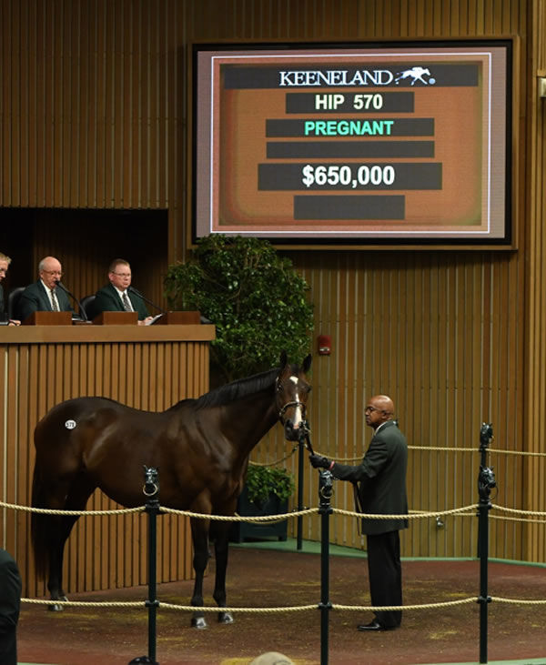 Conquest Eclipse is in foal to Triple Crown hero Justify