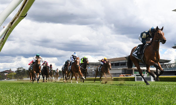 Drisana, chestnut with white blaze, powers into second behind the flying Coolangatta - image Steve Hart.