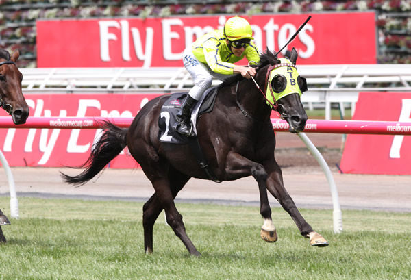 Dandino retired after winning the G3 VRC Queens Cup at Flemington - image Racing Photos.