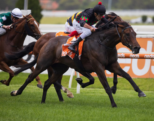 Defibrillate is on track for the G1 Australian Cup - image Grant Courtney.