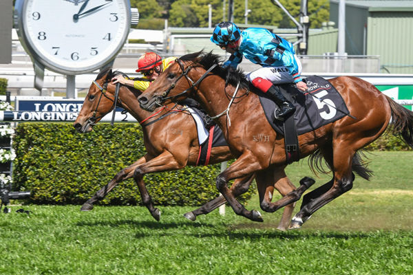 Dubious finishes fast down the outside to claim the Breeeders Plate - image Steve hart