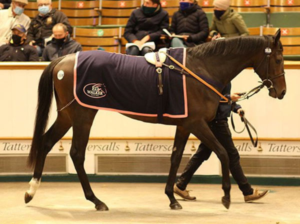 English King broke the record at the Tattersalls Horses in Training Sale