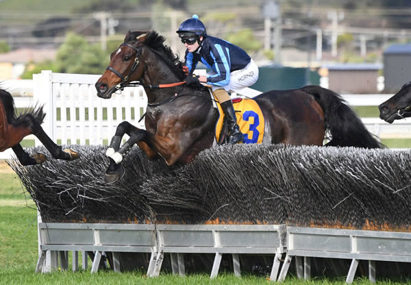 Flying Agent on his way to winning the Brierly Steeplechase (3450m). Photo: Pat Scala (Racing Photos)