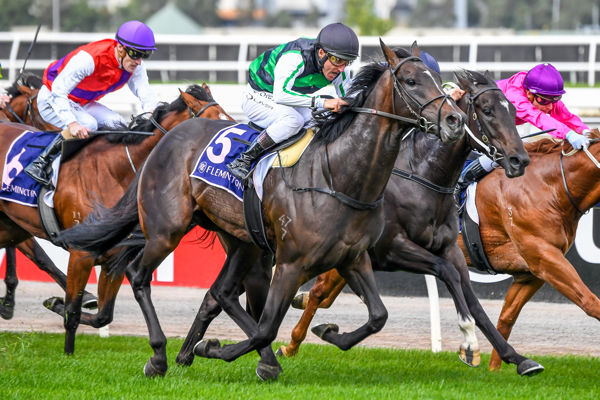 Shamus Award sired the quinella in the Listed VRC Anzac Day Stakes for 2YO's Flying Award defeating  Ironedge - Racing Photos