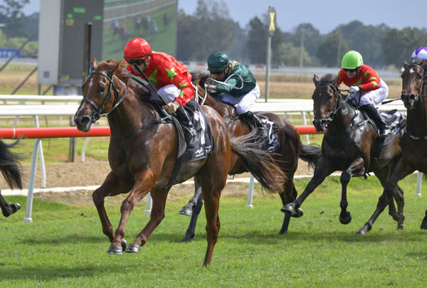 Gleneagles wins the $125,000 Clarendon Stakes - image Steve Hart.