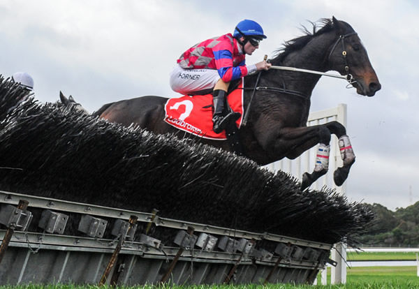 Gobstopper is a star over the jumps - image Brett Holburt Racing Photos