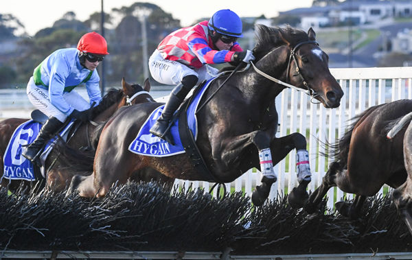 Toffee Tongue's full brother Gobstopper was a winner at Warrnambool - image Racing Photos