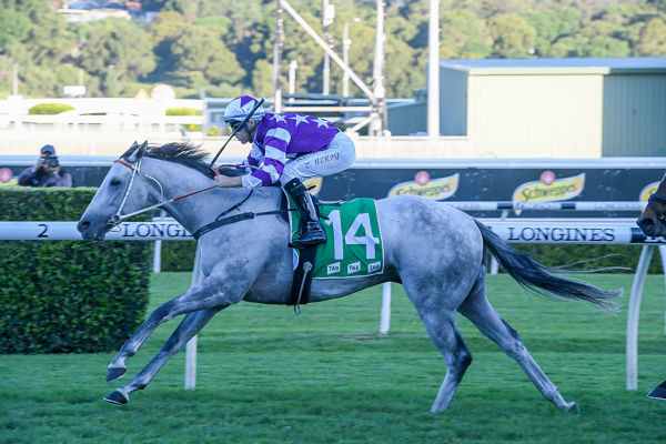 Greyworm all the way in Hall Mark Stakes