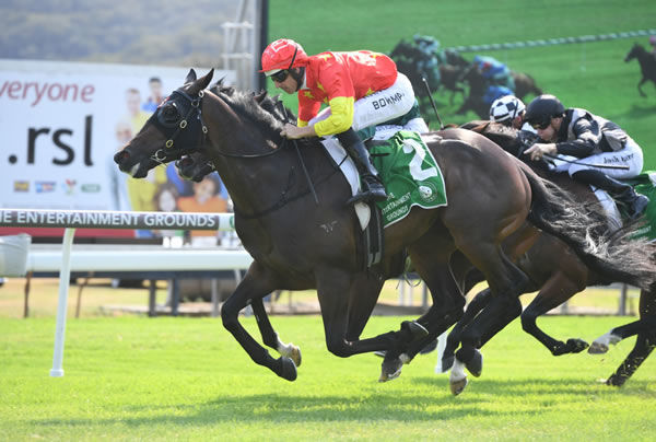 Hightail wins the Gosford Guineas - image Steve Hart