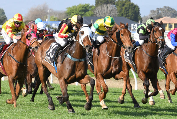 House Of Cartier (white hood) storms to victory in the Gr.3 Boehringer Ingelheim Metric Mile (1600m) at Awapuni Photo Credit: Race Images – Peter Rubery