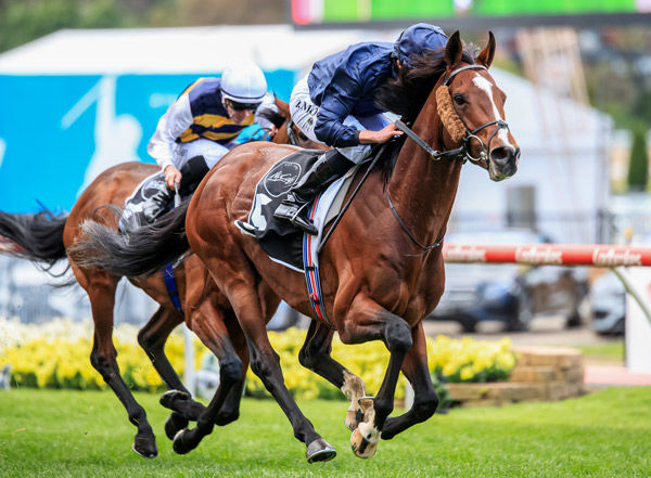 Hunting Horn aiming for a career high - image Grant Courtney
