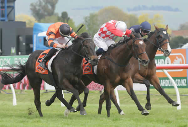 Hypnos (middle) holds out Rock On Wood (outer) and Vigor Winner (inner) to win the Gr.3 Red Badge Spring Sprint (1400m) at Hastings Photo Credit: Trish Dunell