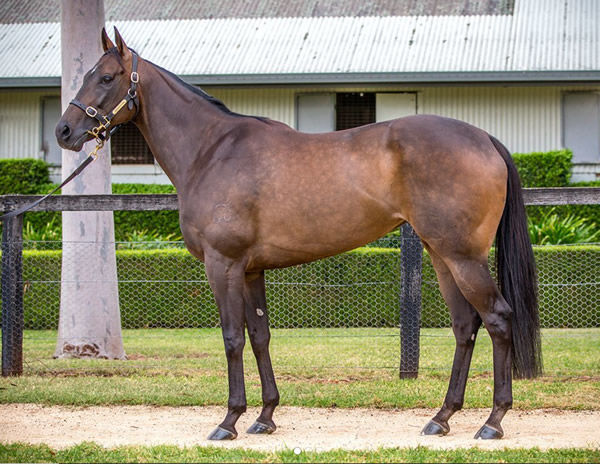 In Her Time sold for $2million at the Inglis Chairman's Sale this year.