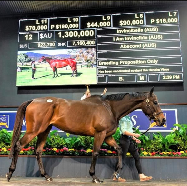 Glenesk have a great record as elite vendors with Invincibella another sales success story!