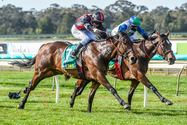 A 1-2 for Fastnet Rock as Irish Playboy gets the better of Early Morning Rise (Brett Holburt/Racing Photos)