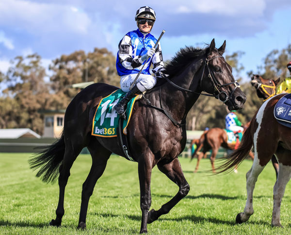 Ironclad has the looks to match his royal heritage (image Grant Courtney)