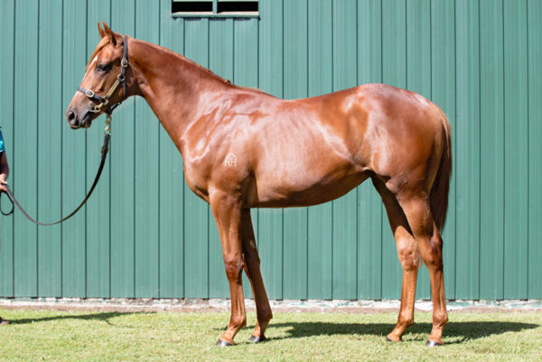 I Say Hello a $280,000 Karaka yearling