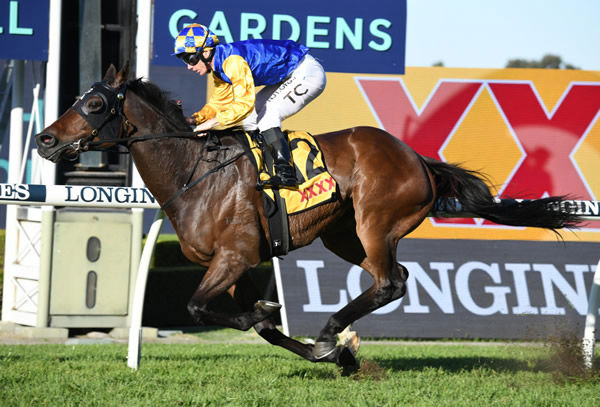 Knights Order kesp the Cup wins coming taking out the G2 Brisbane Cup - image Steve Hart