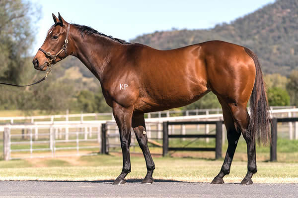 Lot 31 - Kuramae, click to see her page.