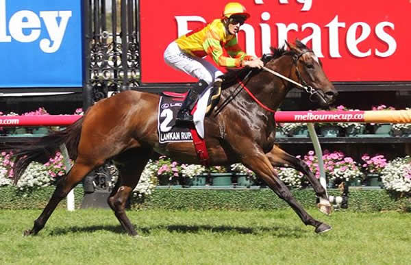 Estelle Collection is the dam of Australian Horse of the Year Lankan Rupee