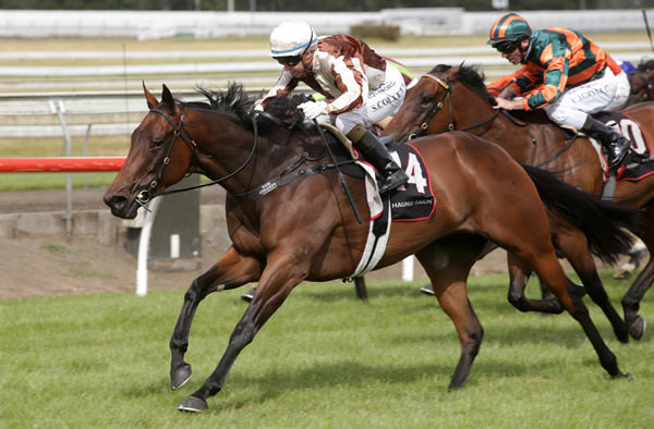 Levante produces a whirlwind finish to take out the Listed Haunui Farm Counties Bowl (1100m) at Pukekohe Photo Credit: Trish Dunell