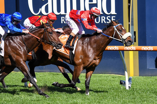 Lightsaber is a star performer for Inglis Ready 2 Race - image Racing Photos.