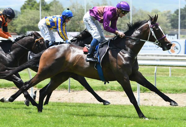 Lincoln Falls makes a successful return to racing at Awapuni Photo: Race Images – Grant Matthew
