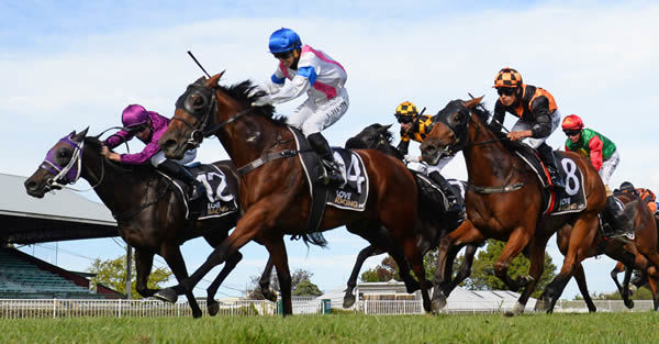 Group One performer Llanacord will be bound for Australia after racing at Te Rapa this weekend. Photo: Race Images