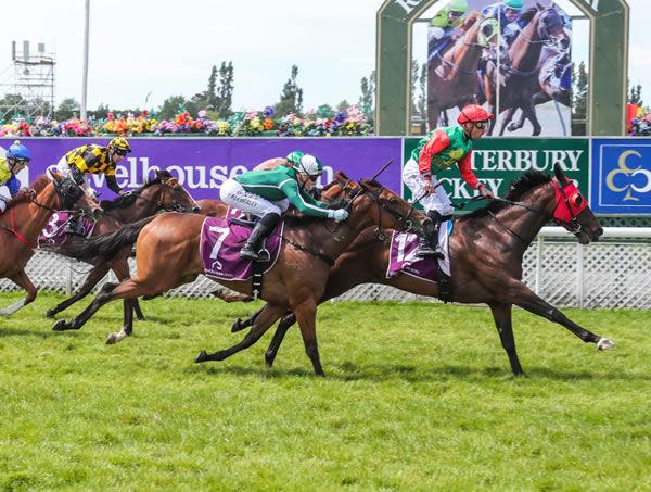 Loire wins the Guineas - Race Images South
