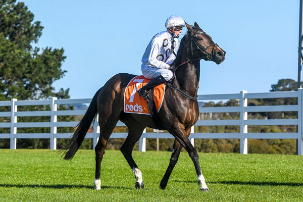 Lunar Flare opens stakes account at age six (image Brett Holburt/Racing Photos)