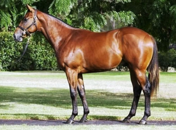 A $380,000 Inglis Easter Yearling purchase, Lunar Rise has had an interesting life!