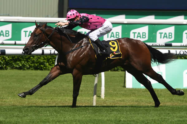 Wandjina colt Mamargan is aiming towards the G1 Golden Rose in the spring.