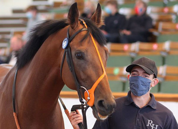 Man of the Night sold for 175,000 guineas.