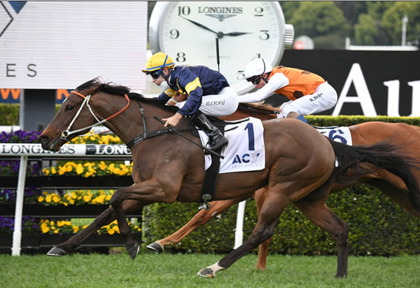 Masked Crusader is still on the improve according to Tommy Berry - image Steve Hart.