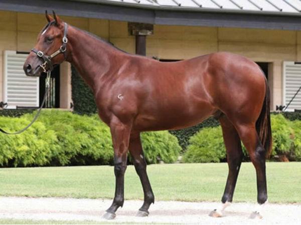 Masked Crusader is the most expensive yearling sired by Toronado