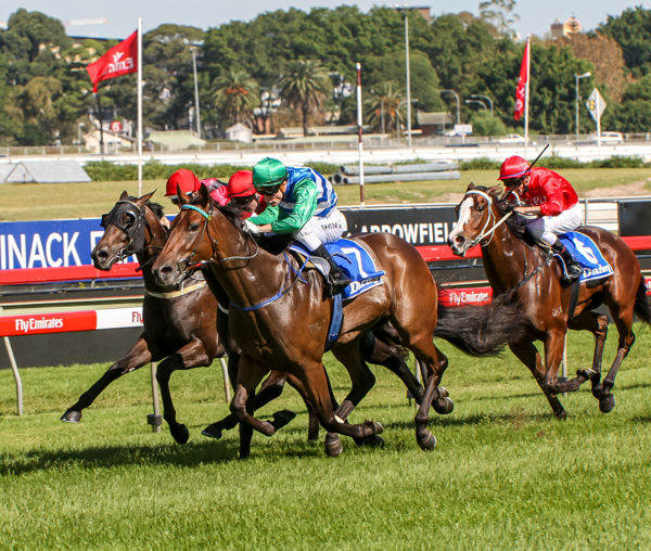 Melito defeats Hot Danish and Mic Mac in TJ Smith Stakes (Mark Smith)
