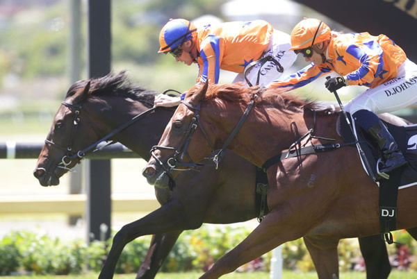 Millefiori has her head in front at the winning post to down stablemate Sneaky Shark at Ellerslie Photo Credit: Trish Dunell