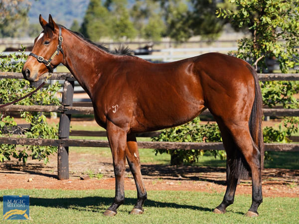 Minhaaj sold for $1.8million at the Shadwell Dispersal