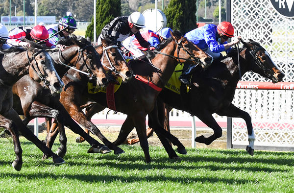 Miss Divine Em gets her head down first in a driving finish at Moonee Valley - image Pat Scala / Racing Photos