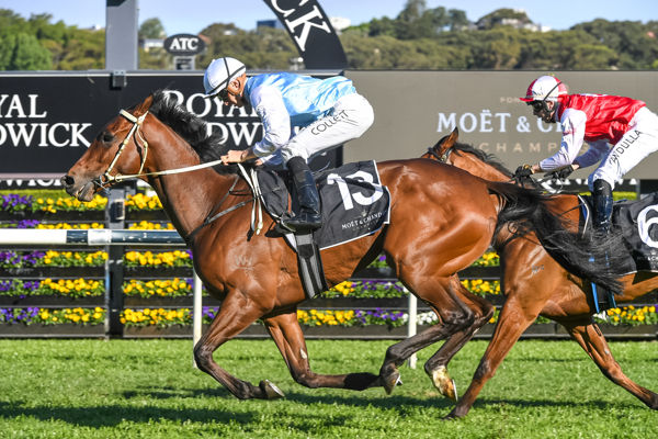 Montefilia is already a two time G1 winner - all Sydney images Steve Hart.