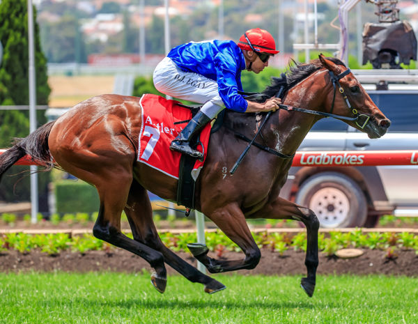 An easy win for Mr Cashman on debut - images Grant Courtney