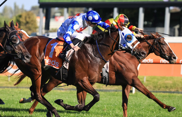 Mr Quickie overpowers Still A Star (image Grant Courtney)