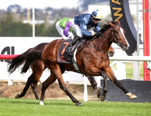Promising filly Mustang Victory wins comfortably at Te Rapa Photo Credit: Trish Dunell