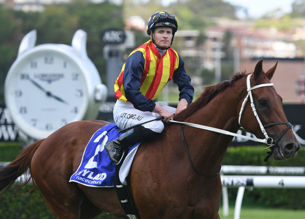 Nature Strip brought his A game to Randwick!