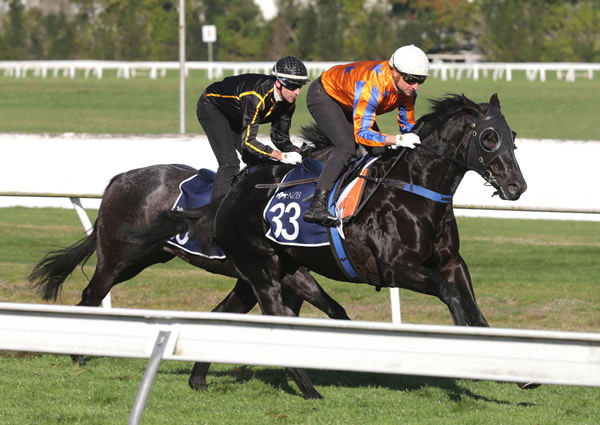 No Limits winning his 900m heat at the Cambridge Stud Te Rapa trials on Tuesday. Photo: Trish Dunell